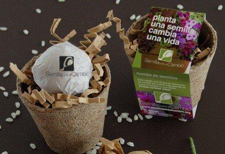 Macetita con bomba de semillas