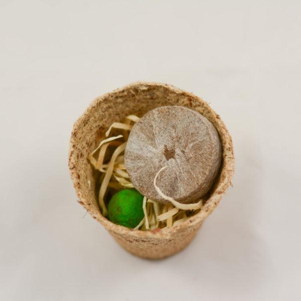 Maceta con semillas como detalle solidario de boda